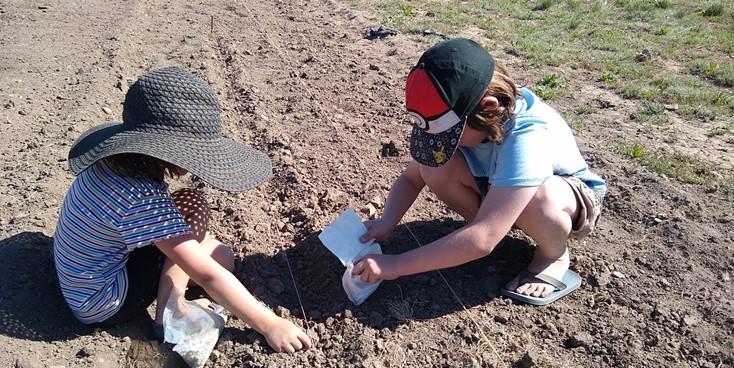 Aven Scarlet planting.jpg