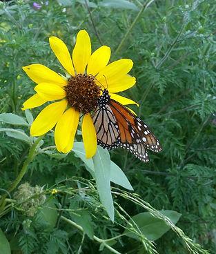 Flower&Butterfly.jpg