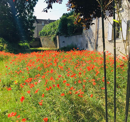 champs coquelicots.jpg