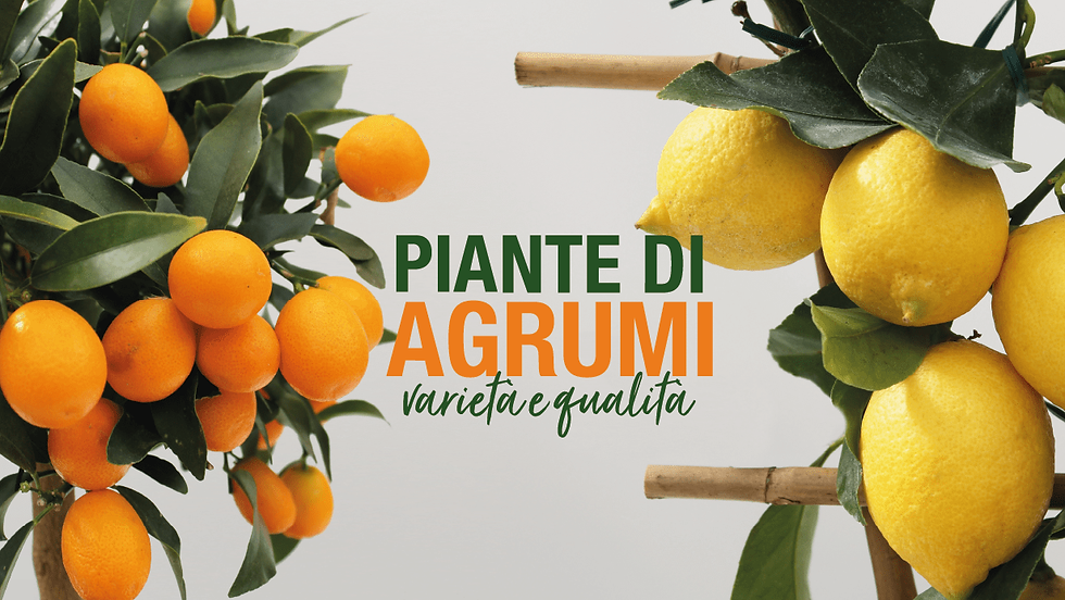 copertina-calliari-agrumi-min.png
