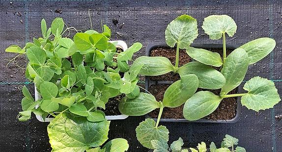orto piante.jpeg