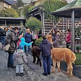 alpaca-1.jpeg