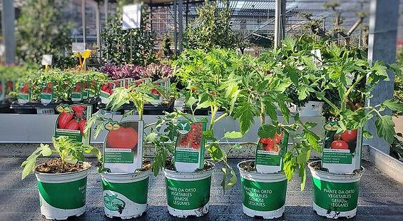 Verdure CalliariFiori-5.jpeg