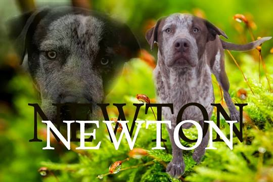NEWTON à l'adoption