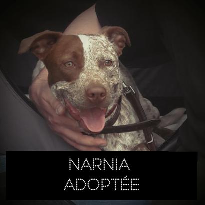 NARNIA adoptée le 23/05/2018