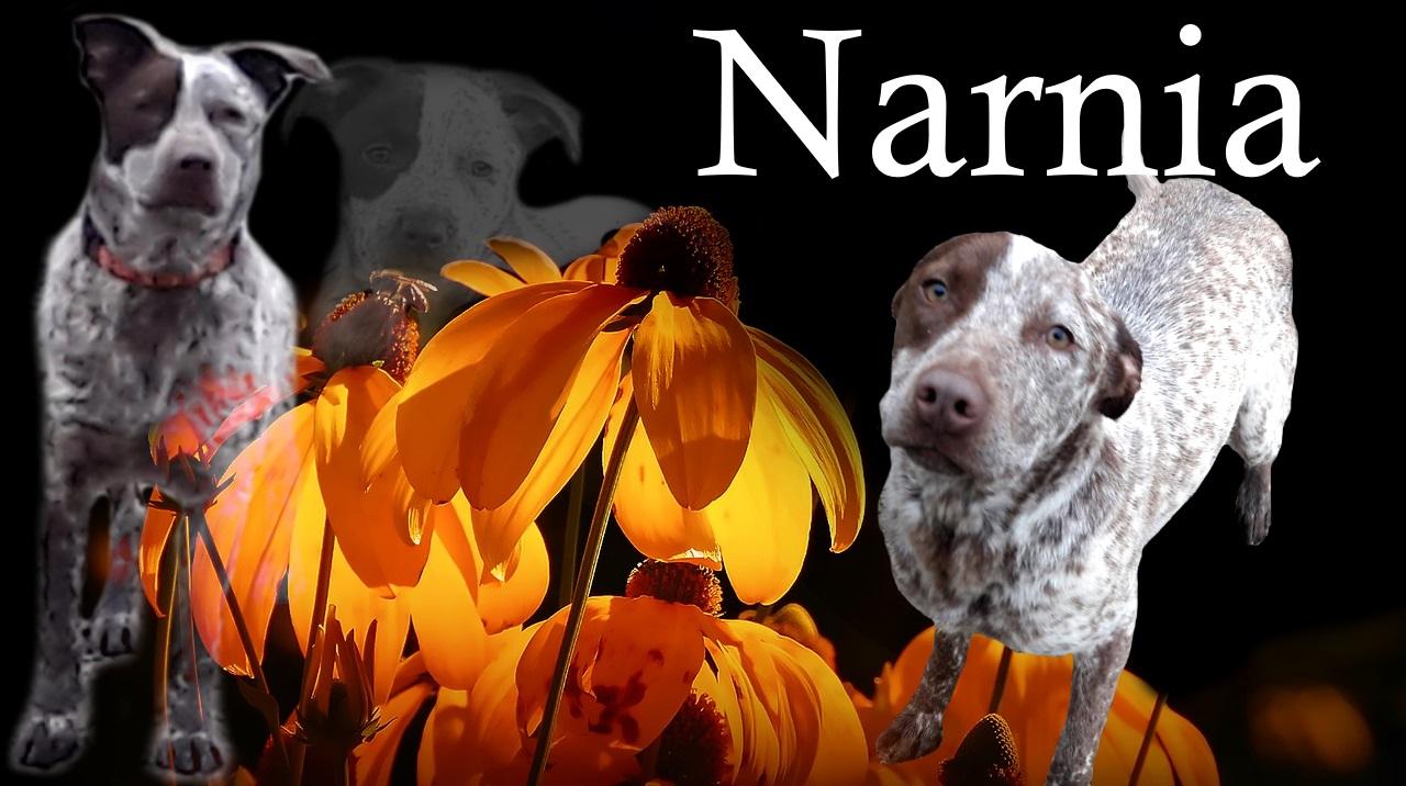 NARNIA à l'adoption