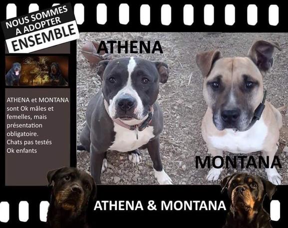 ATHENA  & MONTANA