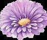 Fleur mauve