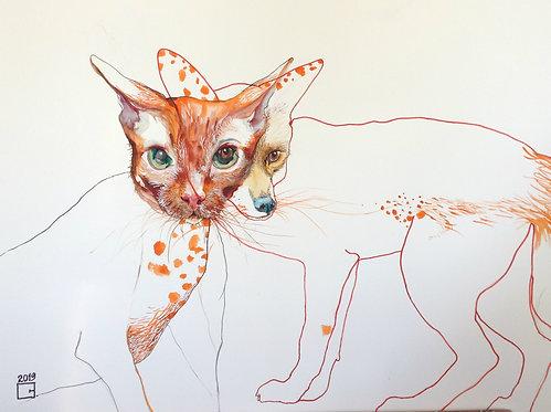 catsyfox