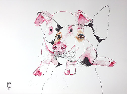 full view of dog and pig