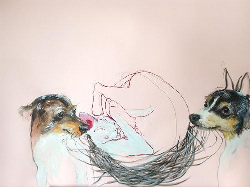 Whiskers nest