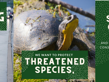Protect Ontario's Conservation Authorities