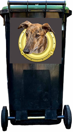 Yogi on grey wheelie bin-Edit 2 LR.jpg
