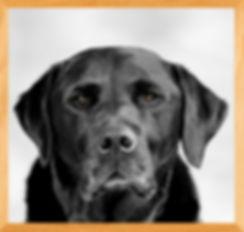 Food bin Barney in Wooden frame 2020-02-