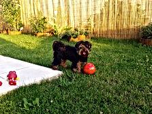Sethi jouant dans le jardin