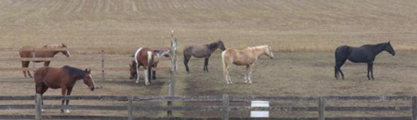All Horses copy.jpg