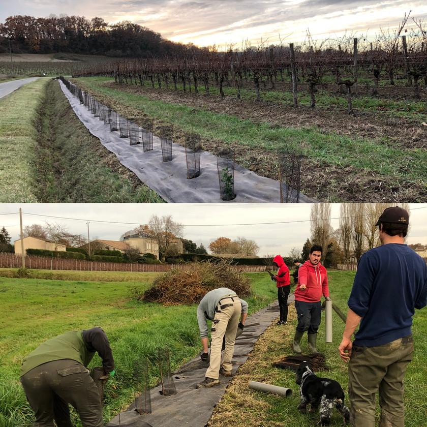 Biodiversity in a bordeaux vineyard