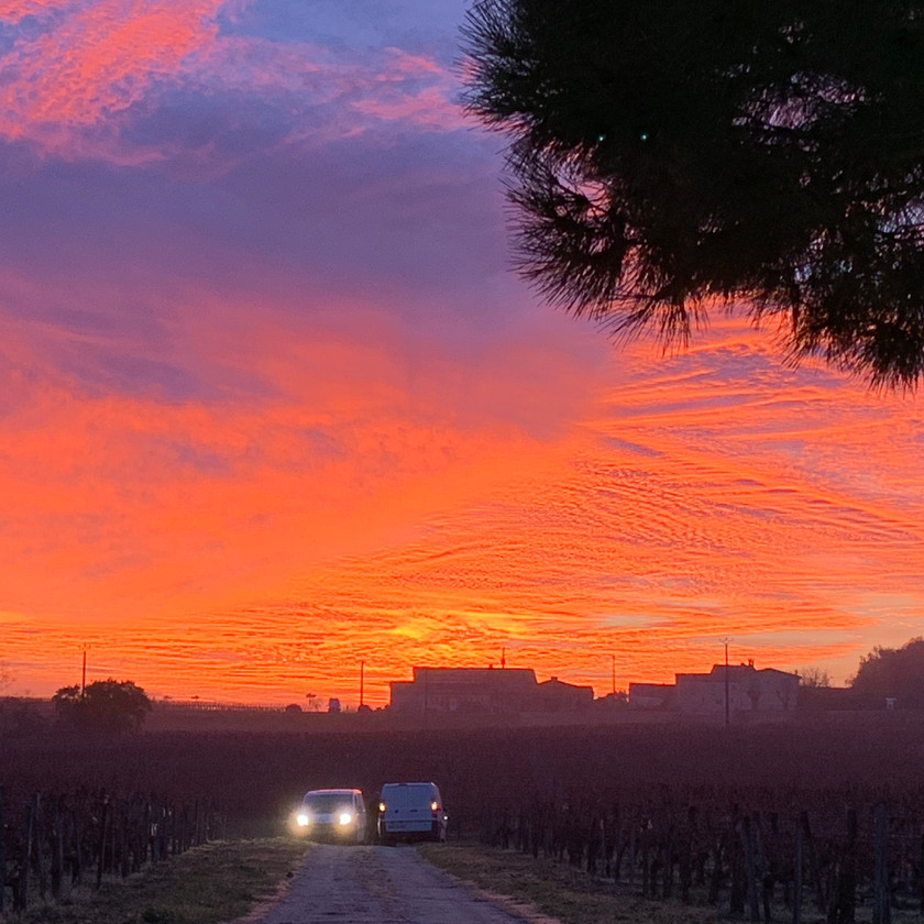 Sunrise over the vineyard at Chateau George 7