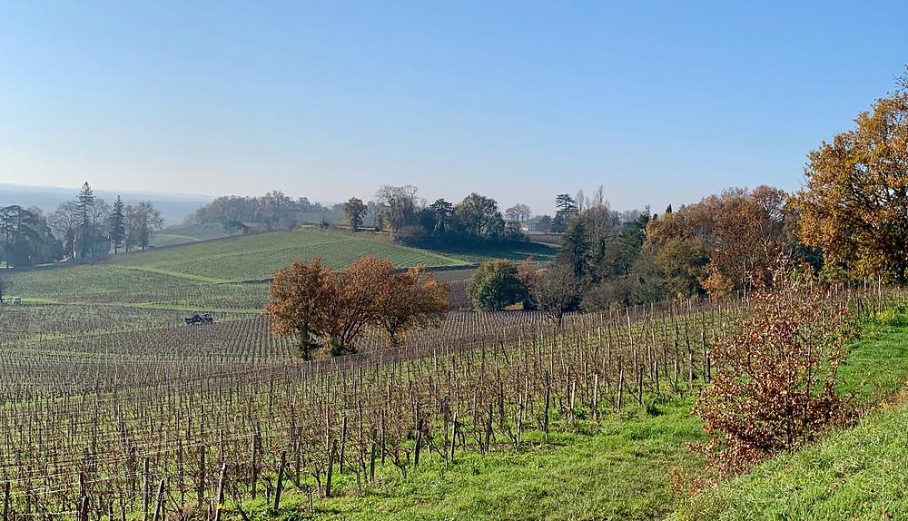 Fronsac vineyard