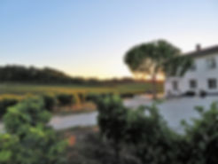 sunset at vineyard in Bordeaux, new vineyard in Saillans, boutique winery in Fronsac