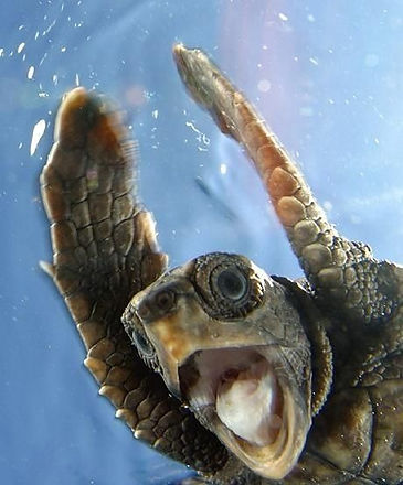 f1f413d6d07912be6080c08b186630ac--happy-turtle-funny-stuff.jpg