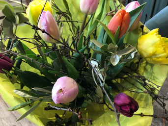 Es ist wieder so weit: Aargauer Tulpen sind erhältlich!