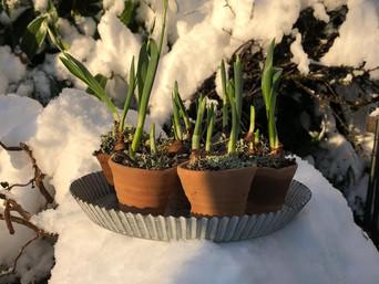 Der Winterzauber lässt Raum für Frühlingsboten.