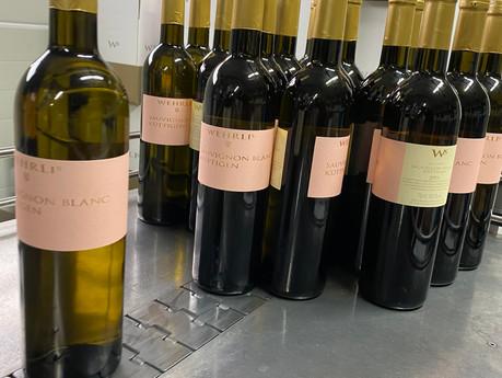 Sauvignon blanc 2019 - ab sofort erhältlich!