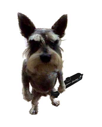 dog transparent with black brush.png