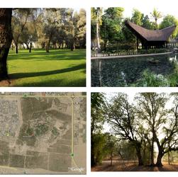 Old Google Earth view of Mushrif Park and photos of Mushrif Park