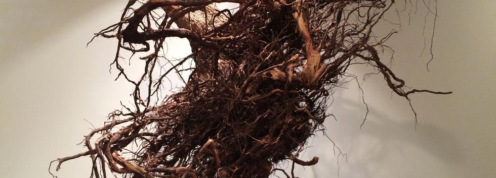 Shaqayeq Arabi Up-Root 94 x 207 x 120 cm