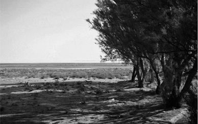 Landscape-02 Unique print 70 x 50 cm 2010