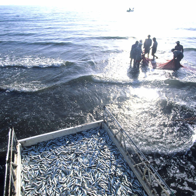 Fishermen in the area of Madhah-Shis
