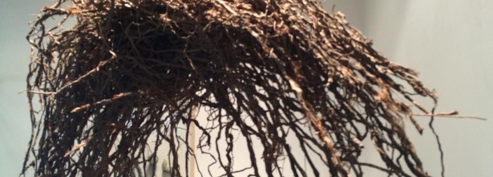 Shaqayeq Arabi Palm Root 69 x 180 x 45 cm