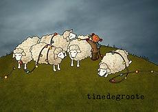kerst schapen.jpg