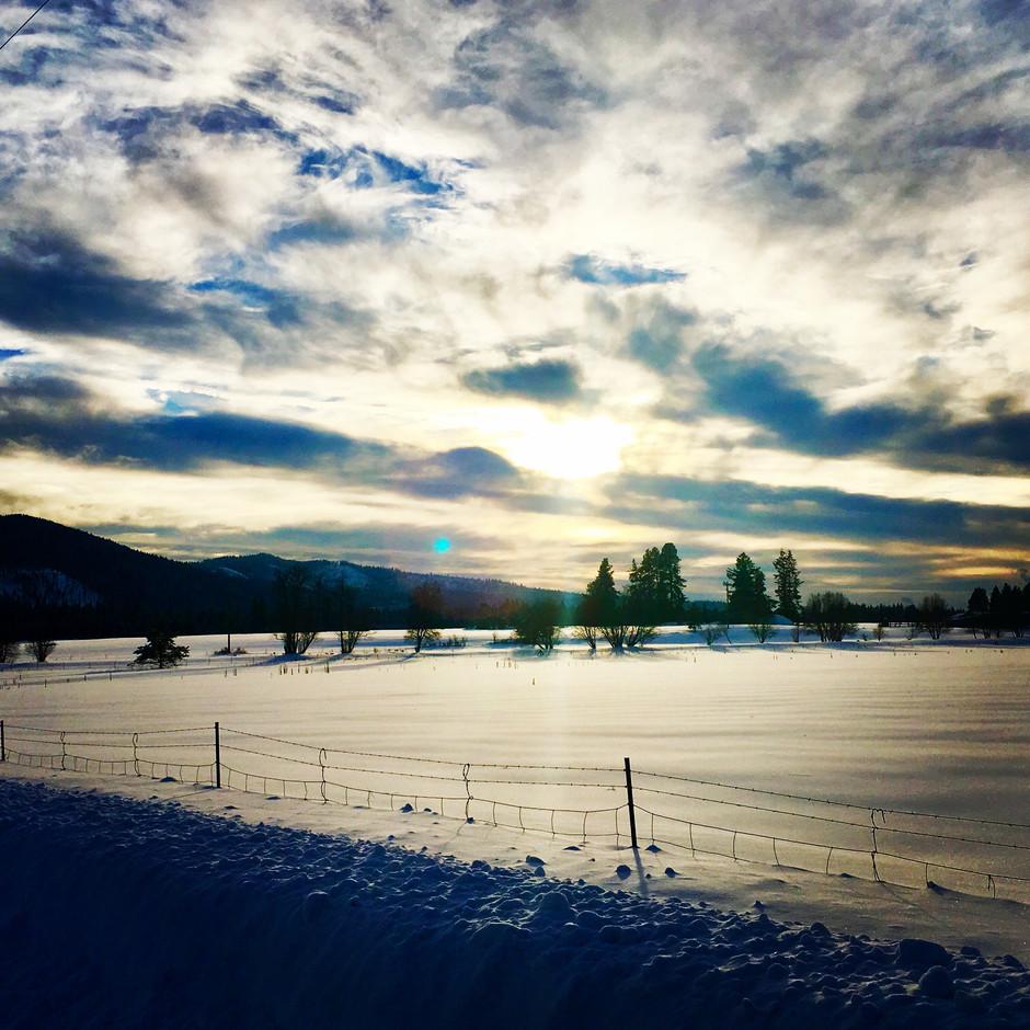 Sun In January