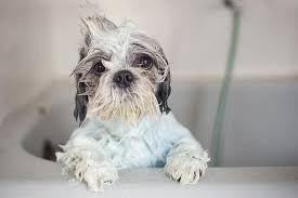 Bath and blow dry Medium dog