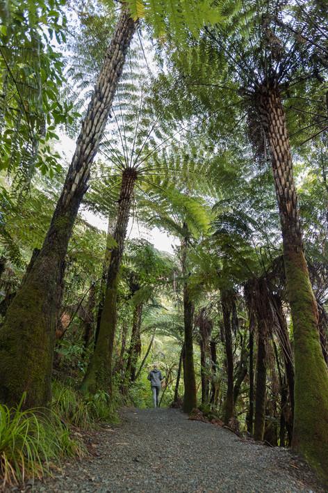 Hunua Ranges, New Zealand