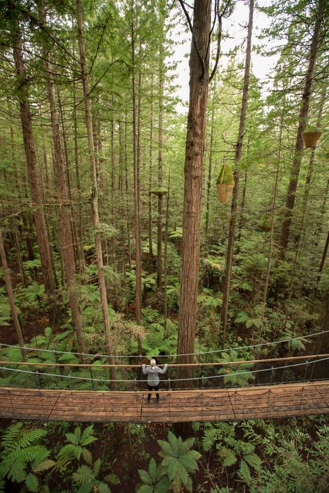 Redwood Treewalk, New Zealand