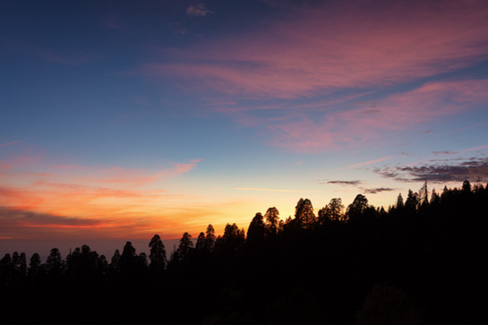 Sequoia National