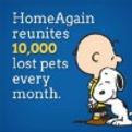 HomeAgain.jpg
