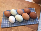 Our hens lay eggs of many colors -- all delicious.