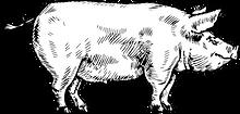 Cochon détaillé.png