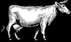 Vache détaillée.png