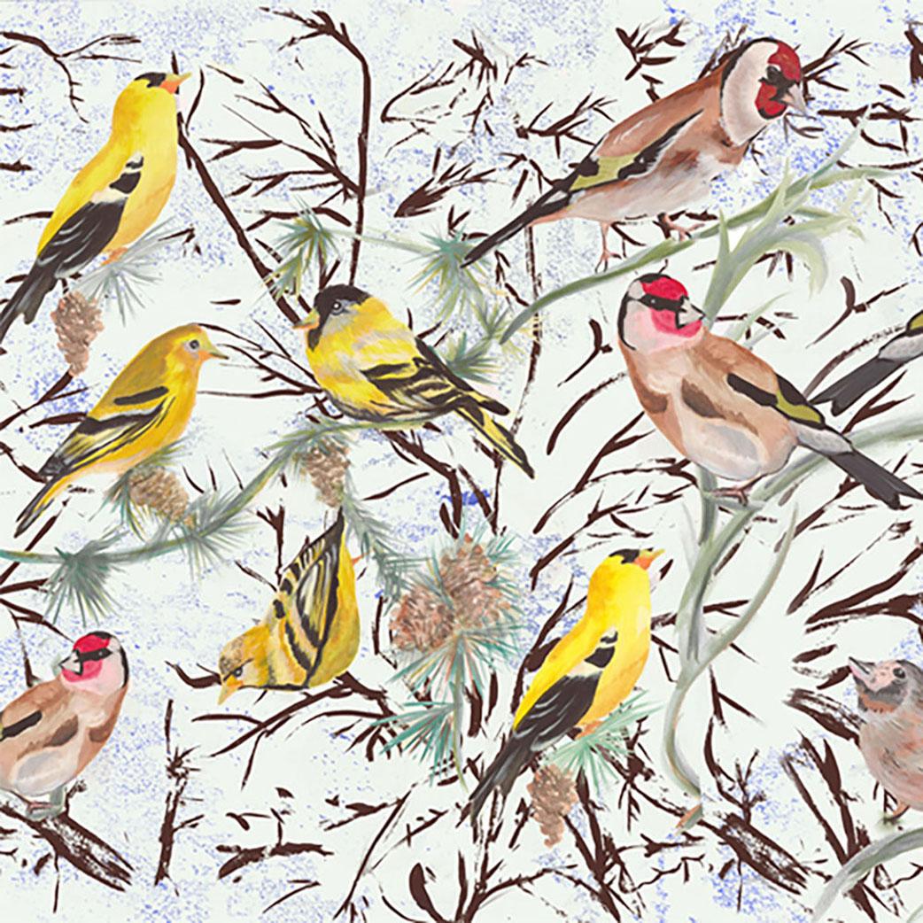 birds 75dpi