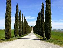 cypress roads_edited_edited.jpg