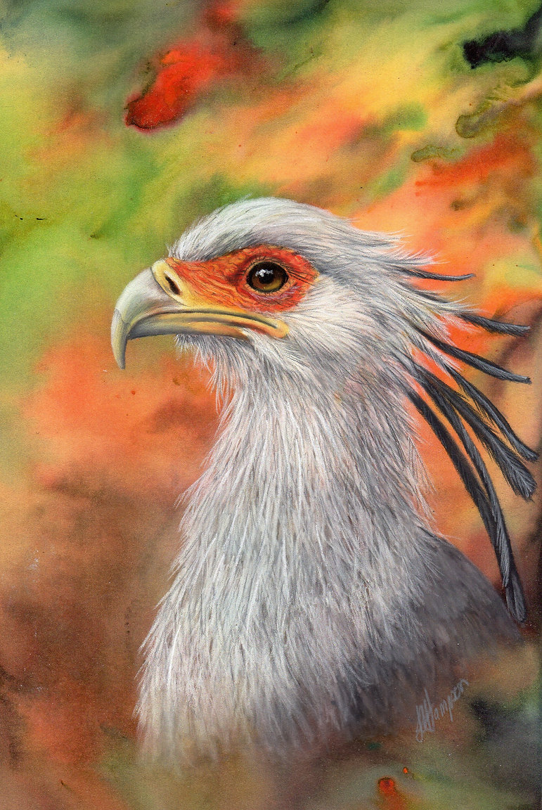 19 Linda Hampson Secretary Bird.jpg