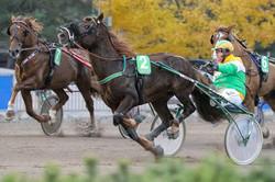 Kuva Anu Leppänen raviurheilu laukka