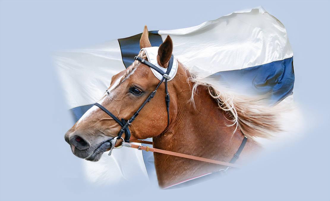 Suomenhevonen 100 v / Finnish Horse 100 years celebration