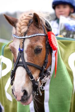 Kuva Anu Leppänen raviurheilu poni